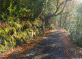 Tiled trail in the forest a sunny morning this is located fragas do eume galicia spain Royalty Free Stock Image