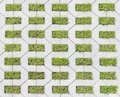 Tiles with grass Royalty Free Stock Photo