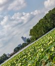 Tilted view of Omaha downtown skyline with Lotus on Carter lake Iowa.