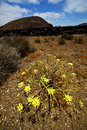Timanfaya vulcanic rock stone sky hill and summer in los volcanes lanzarote spain plant flower bush Stock Photo
