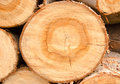 Timber close up arrange orderliness of the Royalty Free Stock Photos