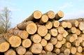 Timber Log stack Royalty Free Stock Photo