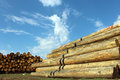 Timber logs in the depot Royalty Free Stock Photos