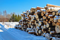Timber pile in the snow Stock Photography