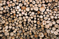 Timber resources Stock Photos