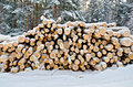 Timber on the snow in winter forest stack of wood a background of trees sky Stock Photography