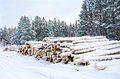 Timber on the snow in winter stack of wood a background of trees sky Royalty Free Stock Image