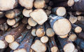 Timber stacked in the forest Stock Photos