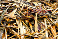 Timber waste Royalty Free Stock Image