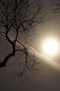 Time of dreams tree and a mystical sun landscape with hazy dreamlike Royalty Free Stock Photos