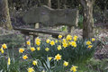 Time for a rest bench made loved one with beautiful daffodils wonderful place to stop and on spring day Royalty Free Stock Photography