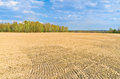 Time of sowing kaluga region russia Royalty Free Stock Images