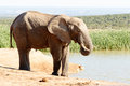 Time Water - African Bush Elephant