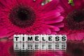 Timeless text message with flowers pink in the background Stock Photography