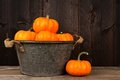 Tin harvest pail with autumn pumpkins over wood Royalty Free Stock Photo