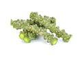 Tinospora cordifolia herb Royalty Free Stock Photo