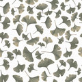 Tinted gingko leaves on white background Stock Image