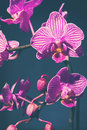 Tinted orchid on blue blossoming background Stock Photo