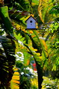Tiny Bird house surrounded by Banana Trees at sunset in the Florida Keys Royalty Free Stock Photo