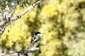 Tiny Bird - Mountain Zebra National Park Royalty Free Stock Photo