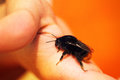Tiny bumble bee sitting on a finger Royalty Free Stock Photo
