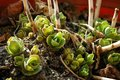 Tiny cacti flowers.