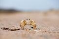 Tiny Crab