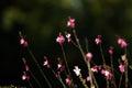 Tiny flowers Royalty Free Stock Photo