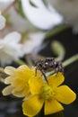 Tiny Jumping Spider Royalty Free Stock Photo