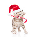 Tiny kitten in red christmas hat holding candy cane in mouth. is Royalty Free Stock Photo