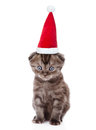 Tiny kitten in red christmas hat looking at camera. isolated on white