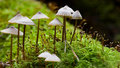 Tiny mushroom Royalty Free Stock Images