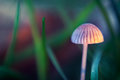 Tiny mushroom among grass Royalty Free Stock Photo