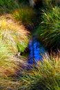 Tiny natural spring Royalty Free Stock Photo