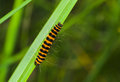 Tiny orange caterpillar Royalty Free Stock Images