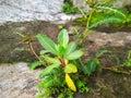 Tiny Plant Life