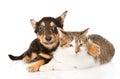 Tiny Puppy Dog Embracing A Cat...