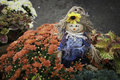 Tiny scarecrow a is placed in a planter of fall mums beautiful autumn colors abound Stock Photography