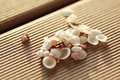Tiny seashells beautiful little and corals a symbol for the ocean Royalty Free Stock Image
