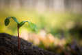Tiny tree sapling Royalty Free Stock Photo