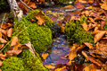 Tiny water stream through moss and fallen leaves at autumn, Radocelo mountain Royalty Free Stock Photo