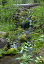 Tiny Waterfall in Forest in HDR Royalty Free Stock Image