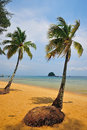 Tioman island malaysia coconut trees in Royalty Free Stock Photos