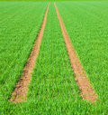 Tire Path In Field Stock Photography