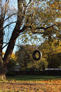 Tire swing hanging from the tree. Royalty Free Stock Photo