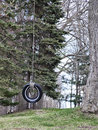 Tire swing hangs from a tall tree Stock Image