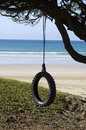 Tire swing an old hanged on a tree by the beach near the sea Royalty Free Stock Images