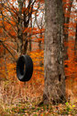 Tire swing in the woods in autumn Royalty Free Stock Image