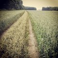 Tire tracks across grassy field or country lane a or farmland Royalty Free Stock Photo