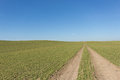 Tire tracks in green field with clear blue sky background Royalty Free Stock Photo
